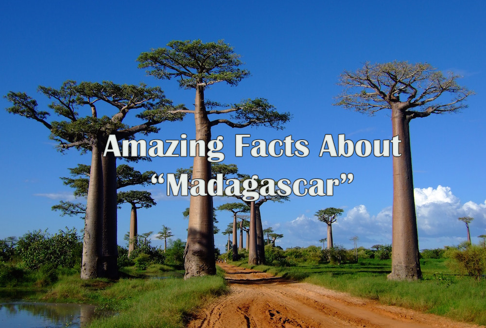 Amazing Facts About Madagascar
