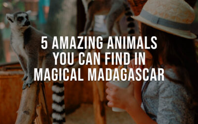 5 Amazing Animals You Can Find in Magical Madagascar