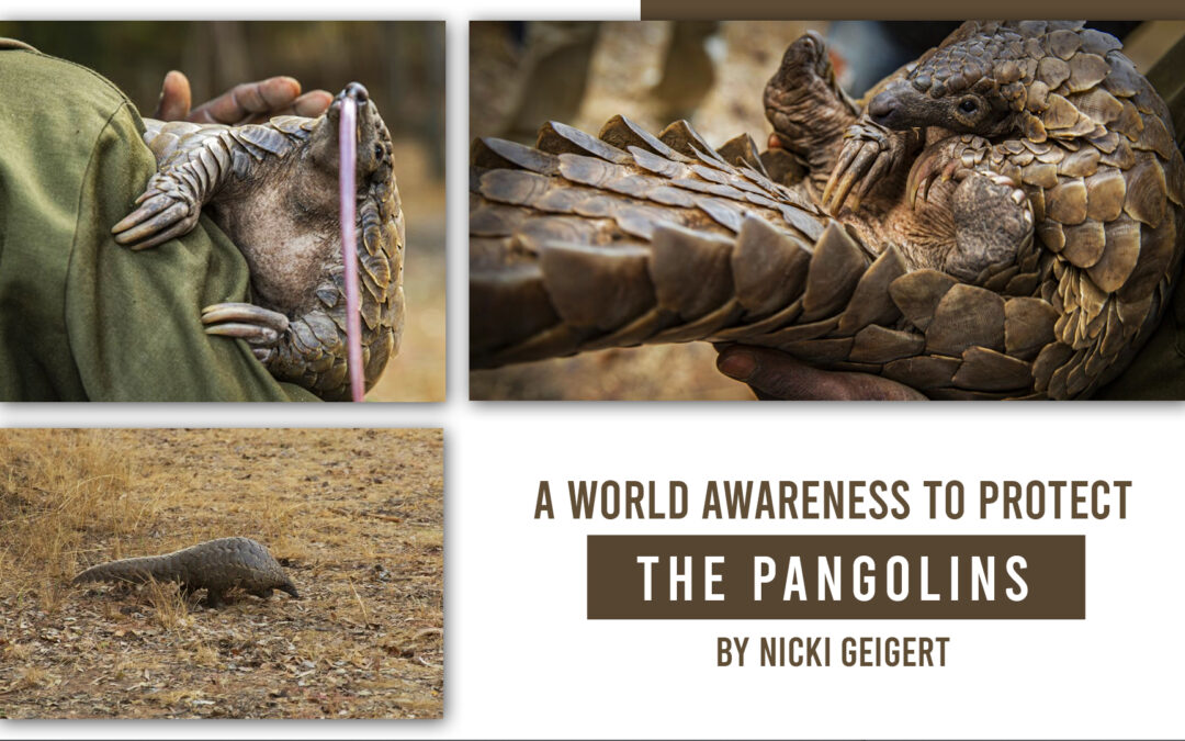 A World Awareness to Protect the Pangolins