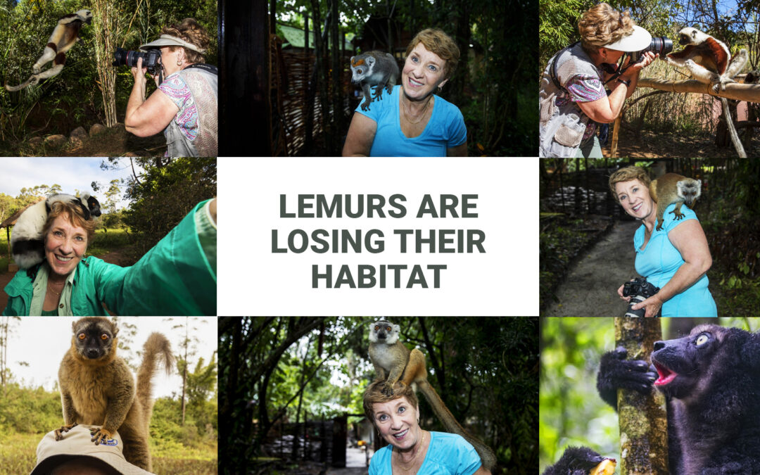Lemurs are Losing Their Habitat