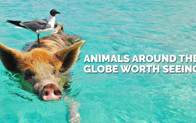 Animals Around the Globe Worth Seeing