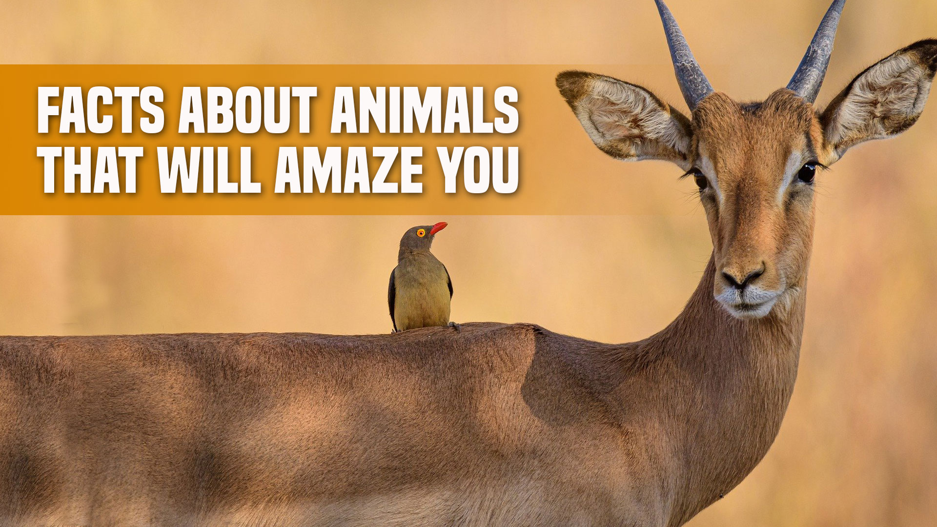 Facts About Animals That Will Amaze You