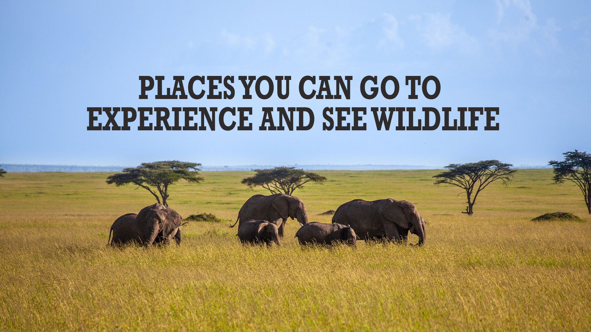 Places You Can Go To Experience And See Wildlife