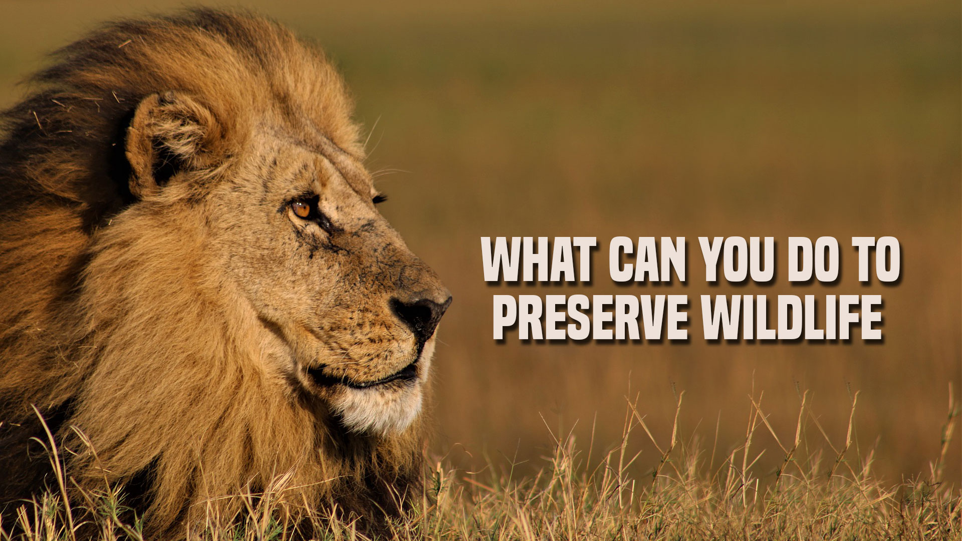 What Can You Do To Preserve Wildlife