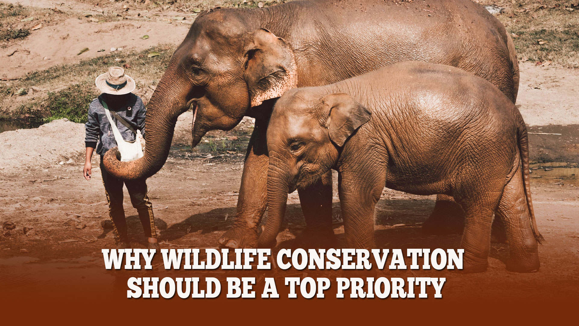 Why Wildlife Conservation Should Be A Top Priority