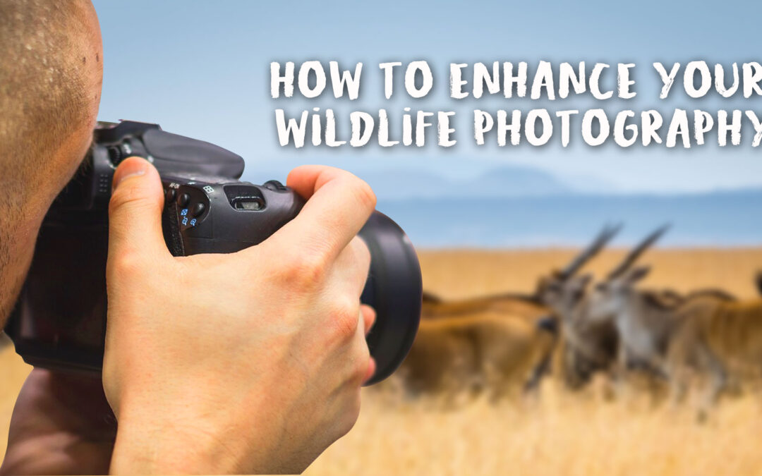 How To Enhance Your Wildlife Photography
