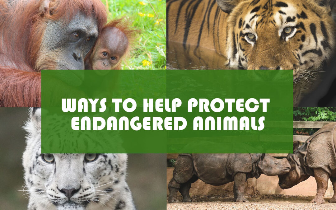 Ways to Help Protect Endangered Animals