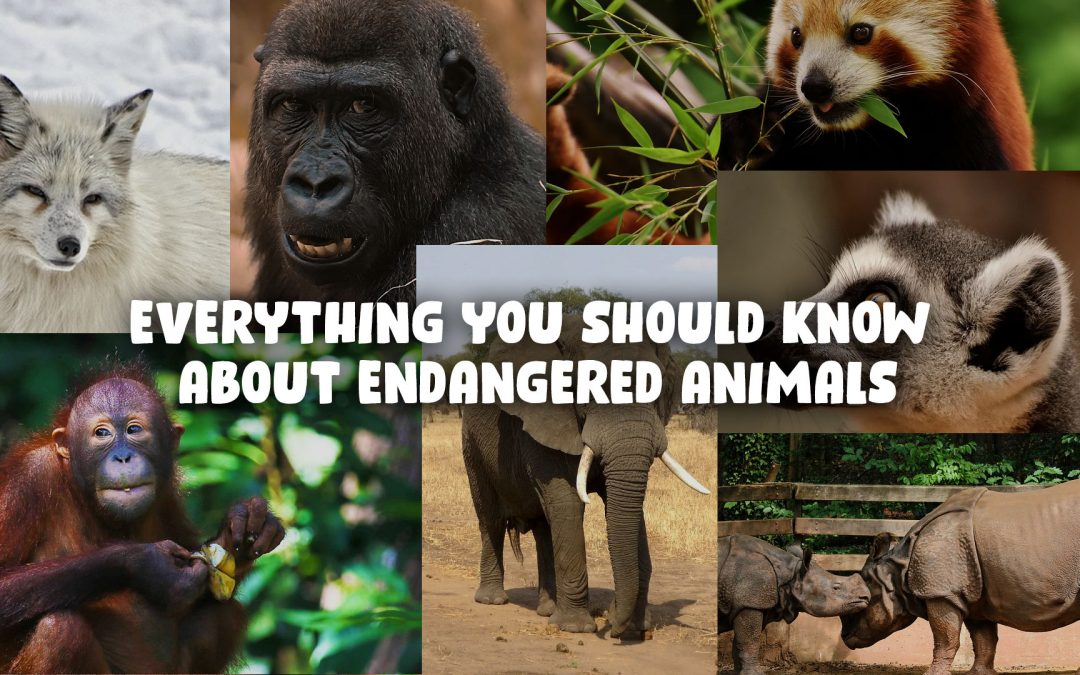 Everything You Should Know About Endangered Animals