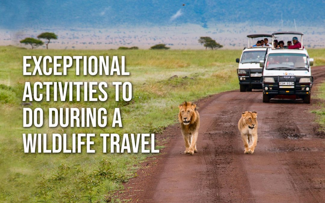 Exceptional Activities To Do During A Wildlife Travel