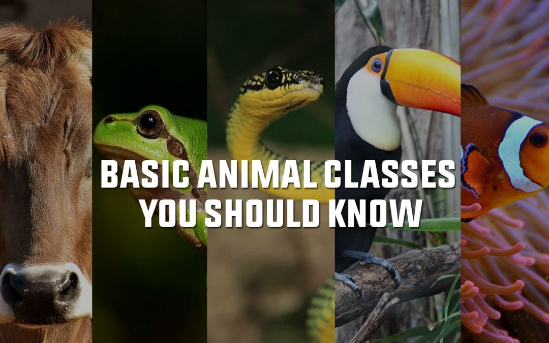 Basic Animal Classes You Should Know