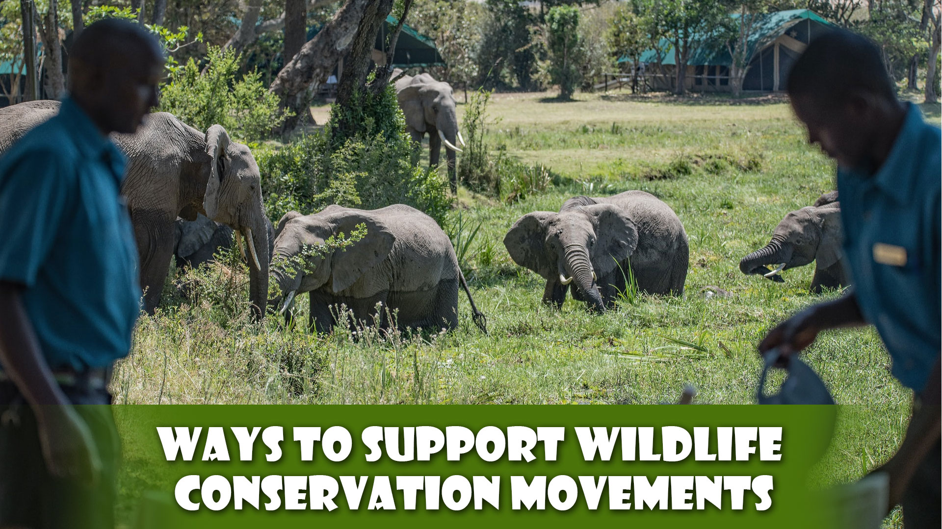 Ways To Support Wildlife Conservation Movements