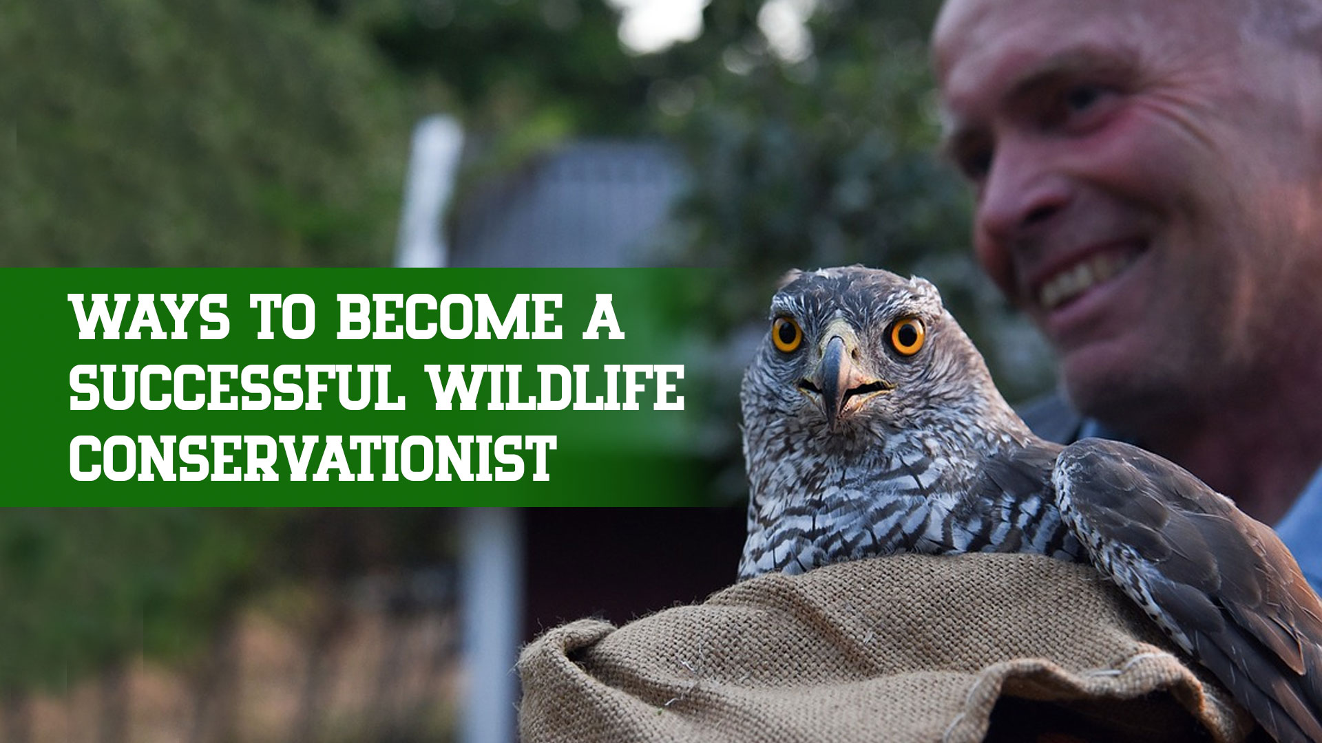 Ways To Become A Successful Wildlife Conservationist